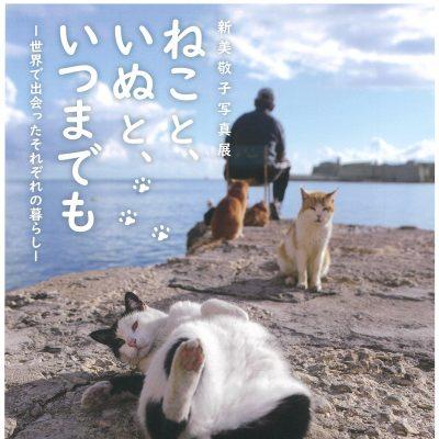 新美敬子写真展 ねこと、いぬと、いつまでも -世界で出会ったそれぞれの暮らし-