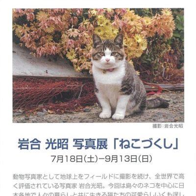 岩合光昭 写真展「ねこづくし」【開催延期 (2021年夏頃 予定)】